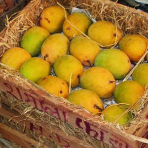 Ratnagiri Alphonso Mango
