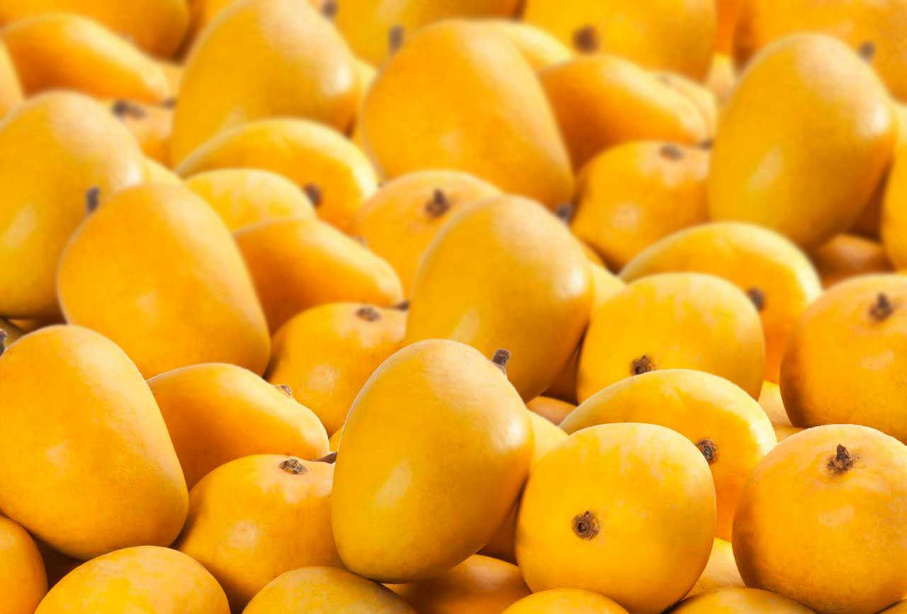 100% Natural & Carbide FREE Ratnagiri, Devgad Alphonso Mangoes Buy Online