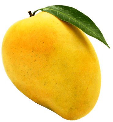 Delicious ripened mangoes on the beach11must watch 4
