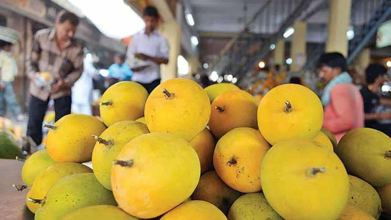Top 12 Most Popular Types Of Mangoes in India