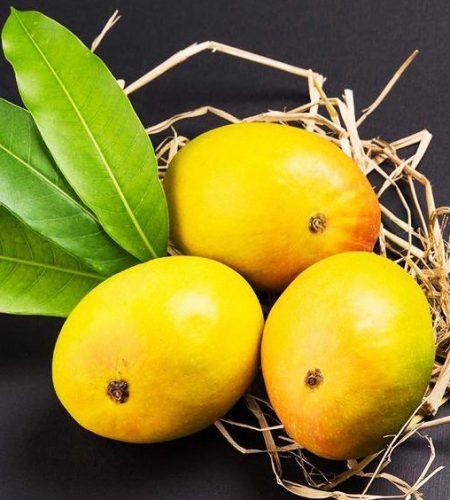 Ratnagiri Devgad Alphonso Mangoes